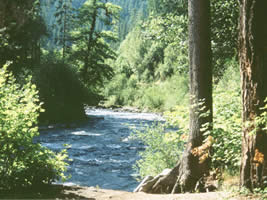 Image of the McKenzie River