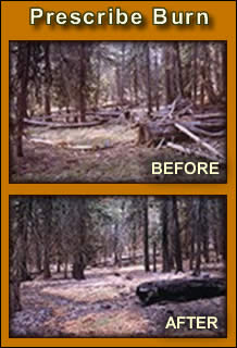 Prescribed Fire - Before and After