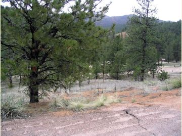 Looking down into sparse woods at a campground