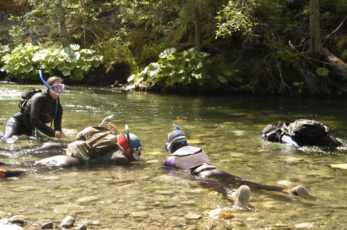 Klamath fish biologists conduct annual snorkel census of salmon and steelhead trout populations.
