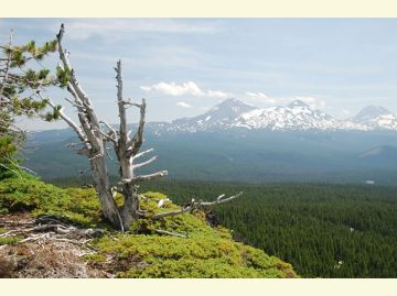 Image of Three Sisters from the Mt Washington Wilderness