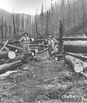 Photo from 1910 of FS staff in the burned woods.