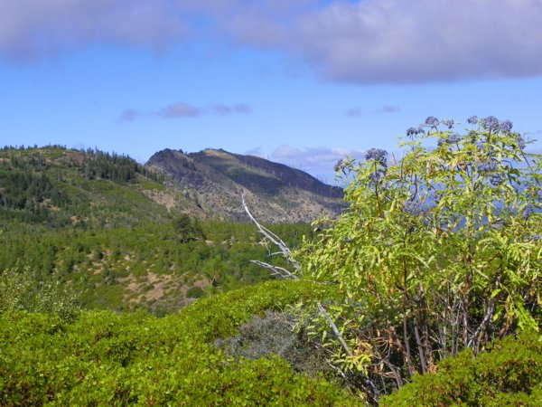 [Photograph]: Elderberry trees in the Sanhedrin Wilderness Area.