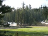 [Photograph]: Plaskett Meadow - Picnic area in background.