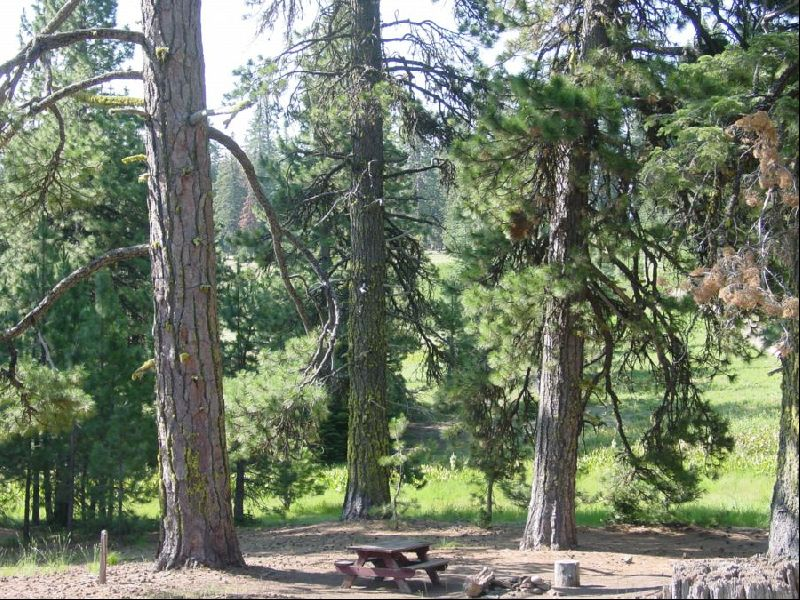 [Photograph]: Picnic Tables at Masterson Group Campground