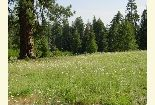 [Photograph]: Meadow of Wildflowers Near Masterson Group Campground.