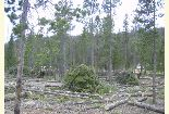 Slash piles in campground