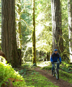 Mountain Biking on the Lewis River Trail