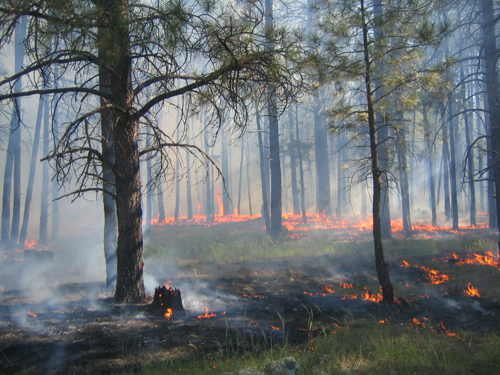 The 2007 Dutch Wildland Fire Use Fire on the Williams Ranger District. Fire managers actively managed the Dutch WFU Fire by determining the appropriate boundaries, weather conditions and fuels conditions under which it would be allowed to burn.