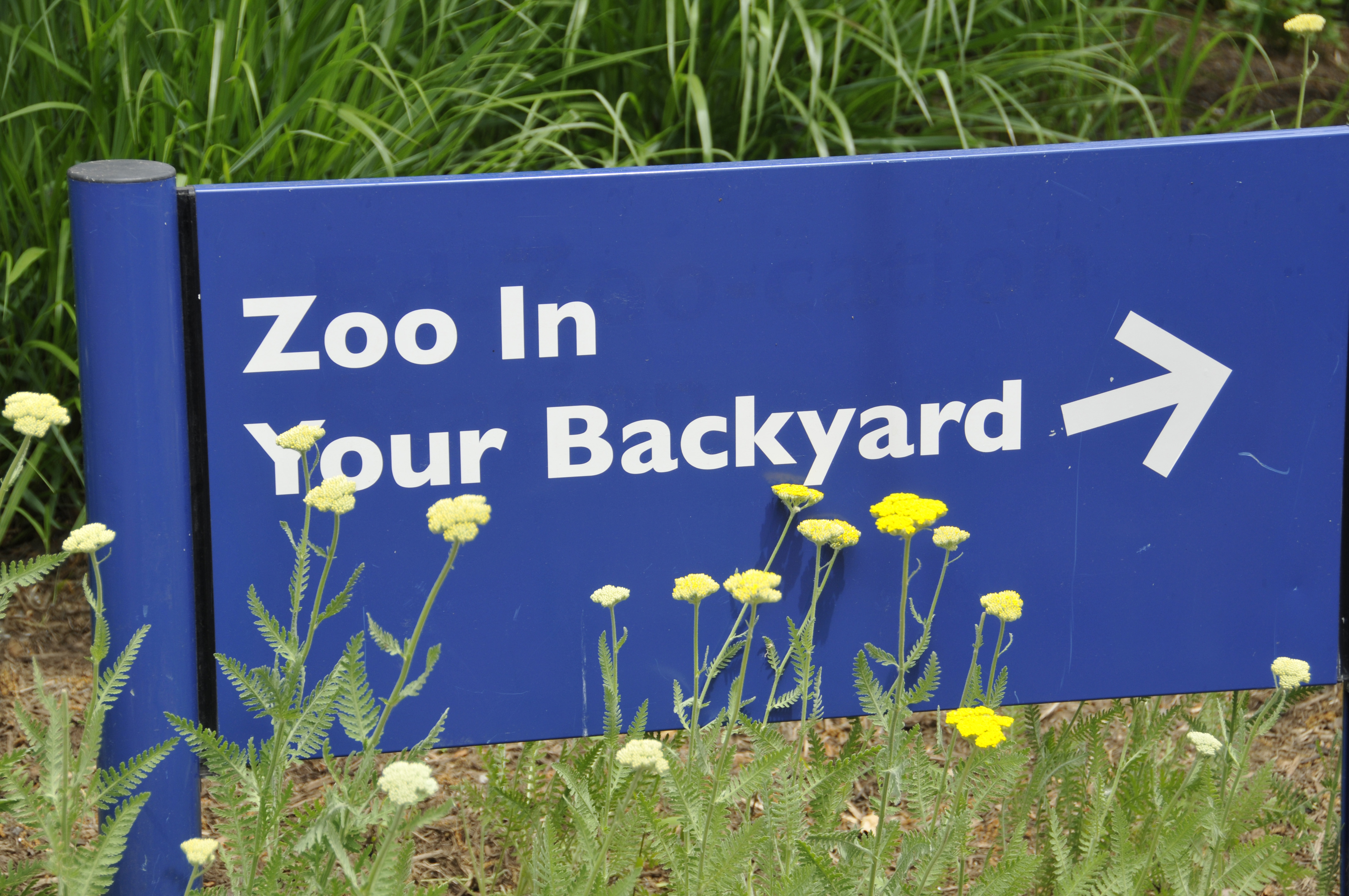 zoo in your backyard sign