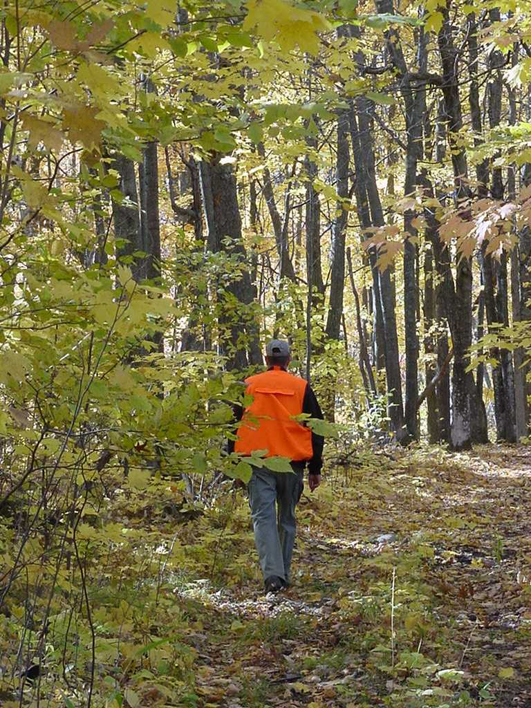 phot of a hunter in orange walking a forest hunter walkign trail