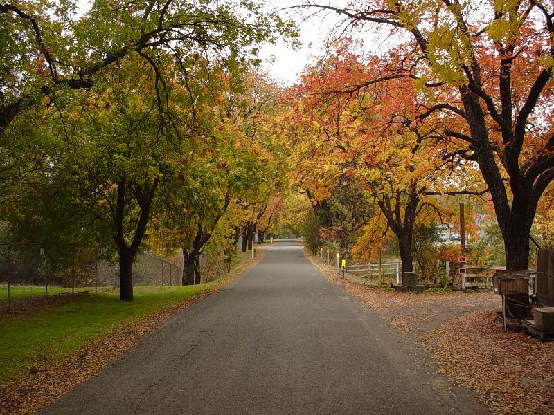 [Photograph]: Cramer Lane, Entrance to Genetic Resource and Conservation Center with Fall Colors.