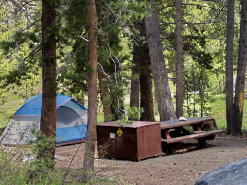A campsite with food locker and table under the tall pines at Upper Pine Grove