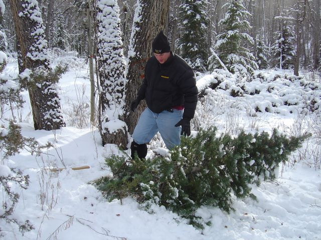 Man cutting down xmas tree