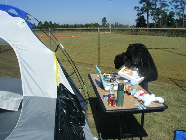 Bear with a box of doughnuts at a campsite