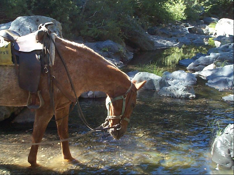 [Photograph]:  Horse at Creek Crossing - Haynes Delight Trail - Yolla Bolly Wilderness.