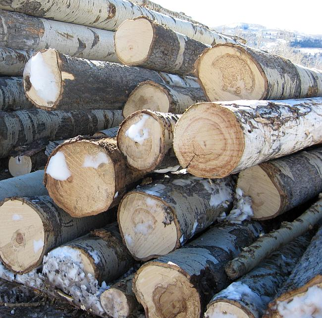 stack of uncut logs
