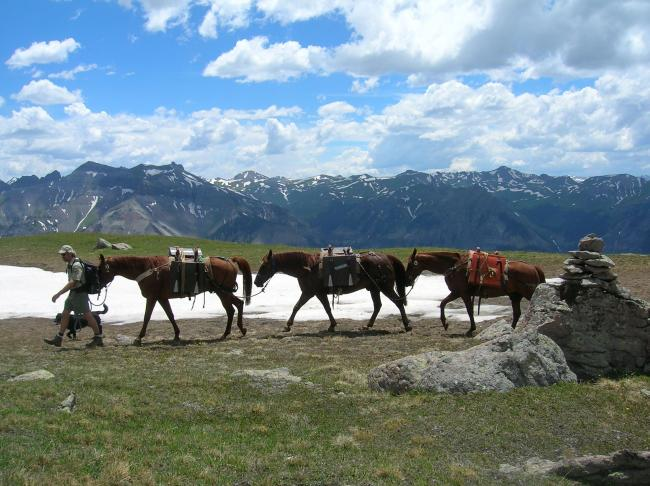Forest employee leading a horse pack train with mountains in the backgroung.