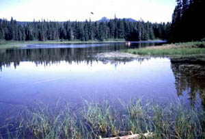 Photo of Forlorn Lakes