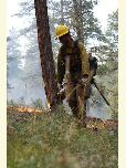 A Kaibab National Forest firefighter applies fire to the landscape using a drip torch.