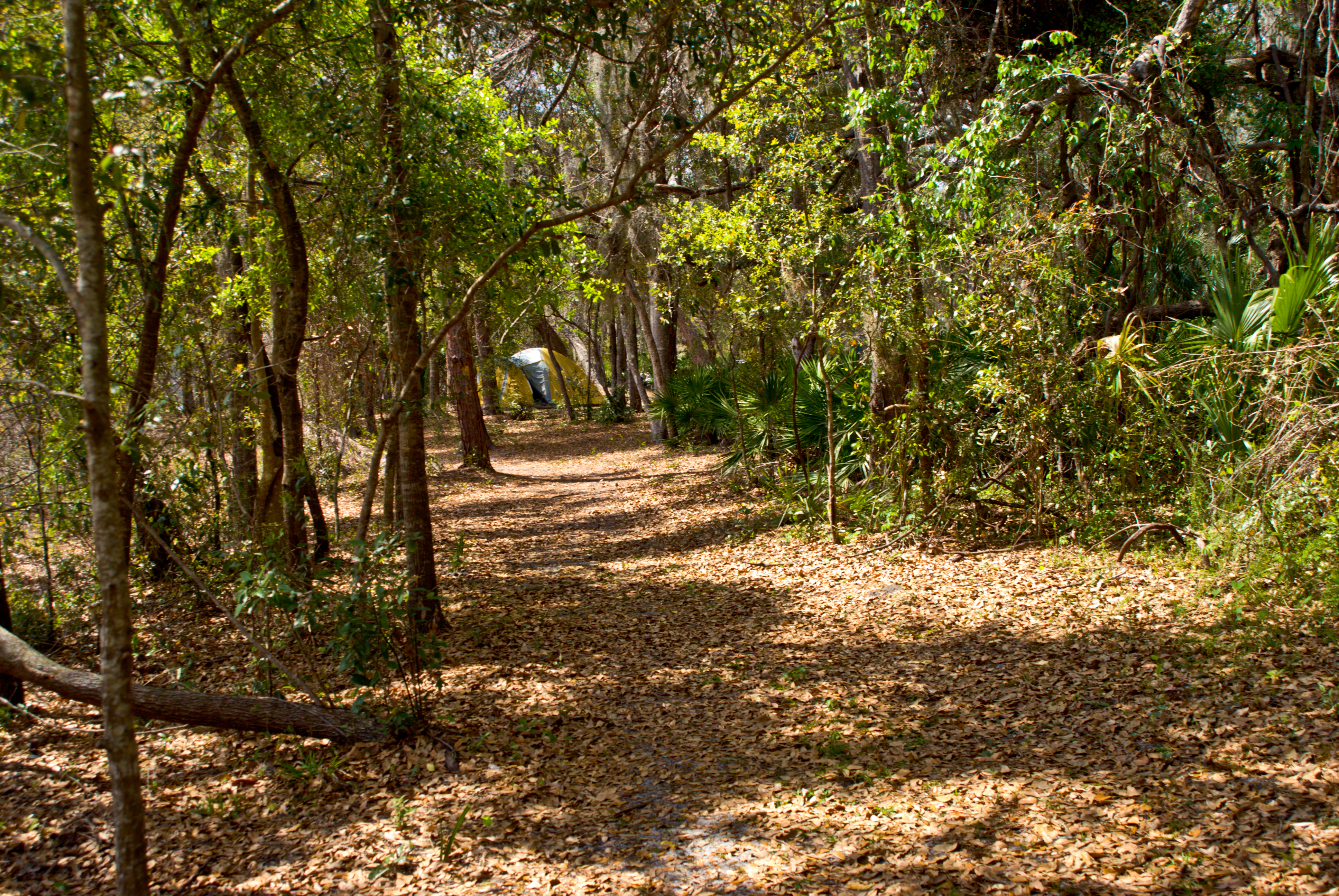 Ocala National Forest - Clearwater Lake Campground