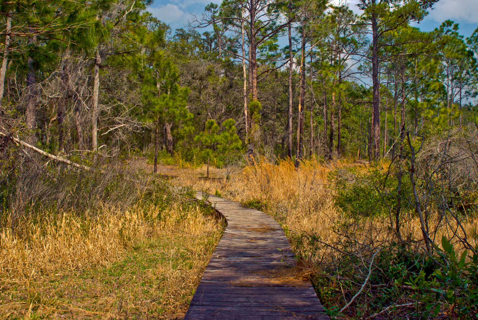 Along the Clearwater Lake Nature Trail