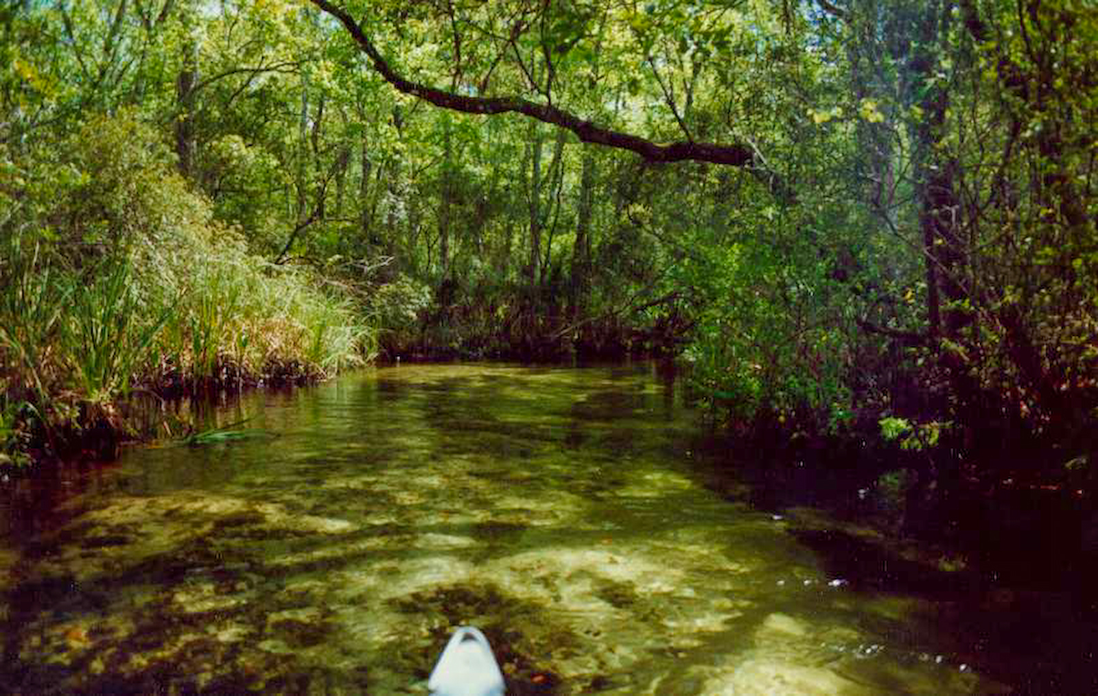 Paddling Juniper Run under dense forest canopy