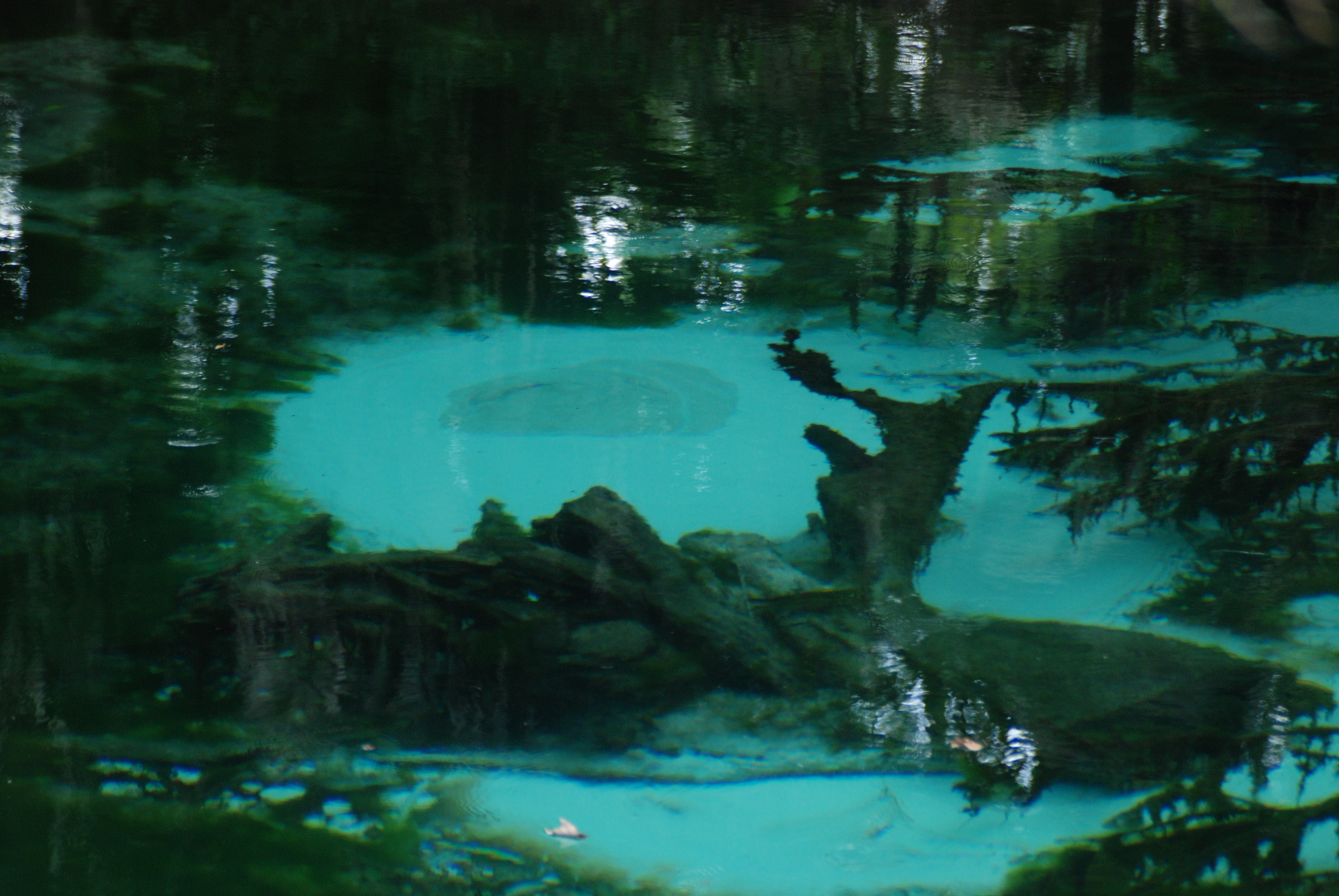 Turquoise spring vents at Fern Hammock Springs