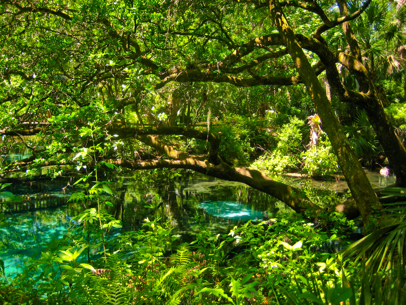 The natural beauty of Fern Hammock Springs