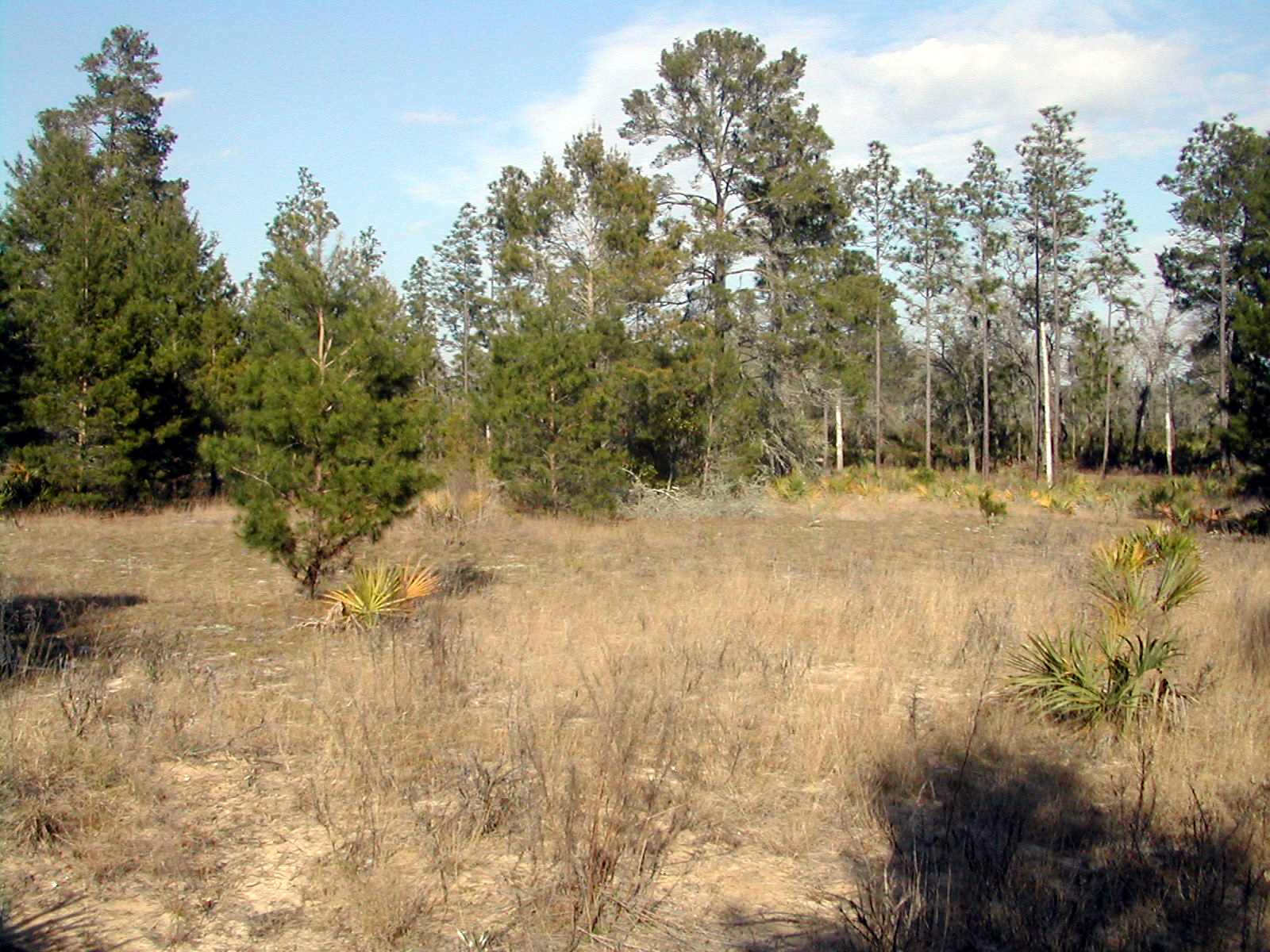 One of the Long Family homesites