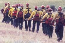 Photo of a group of firefighters.