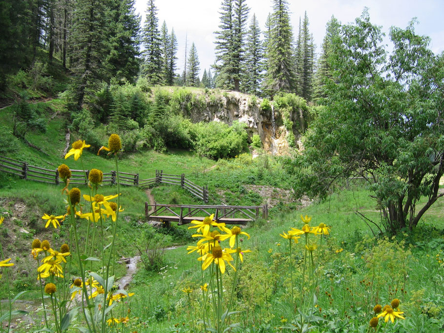 meadow at Bluff Springs