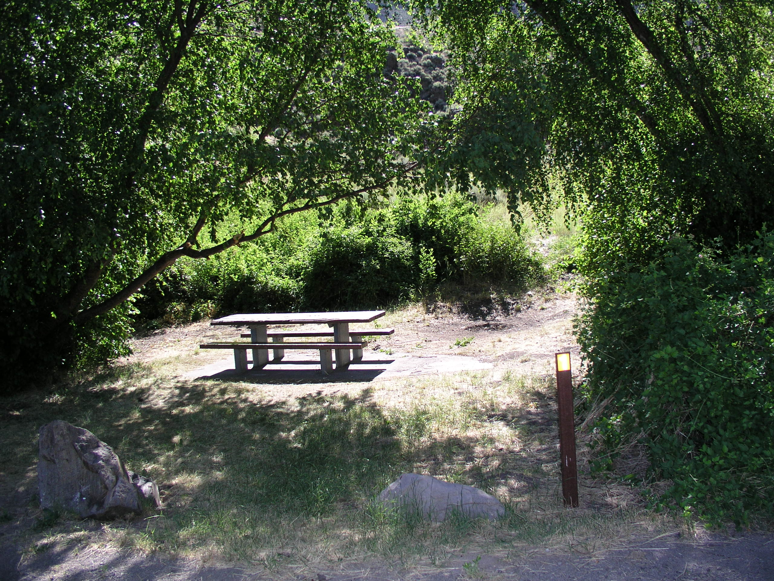 Picnic table and vegetation