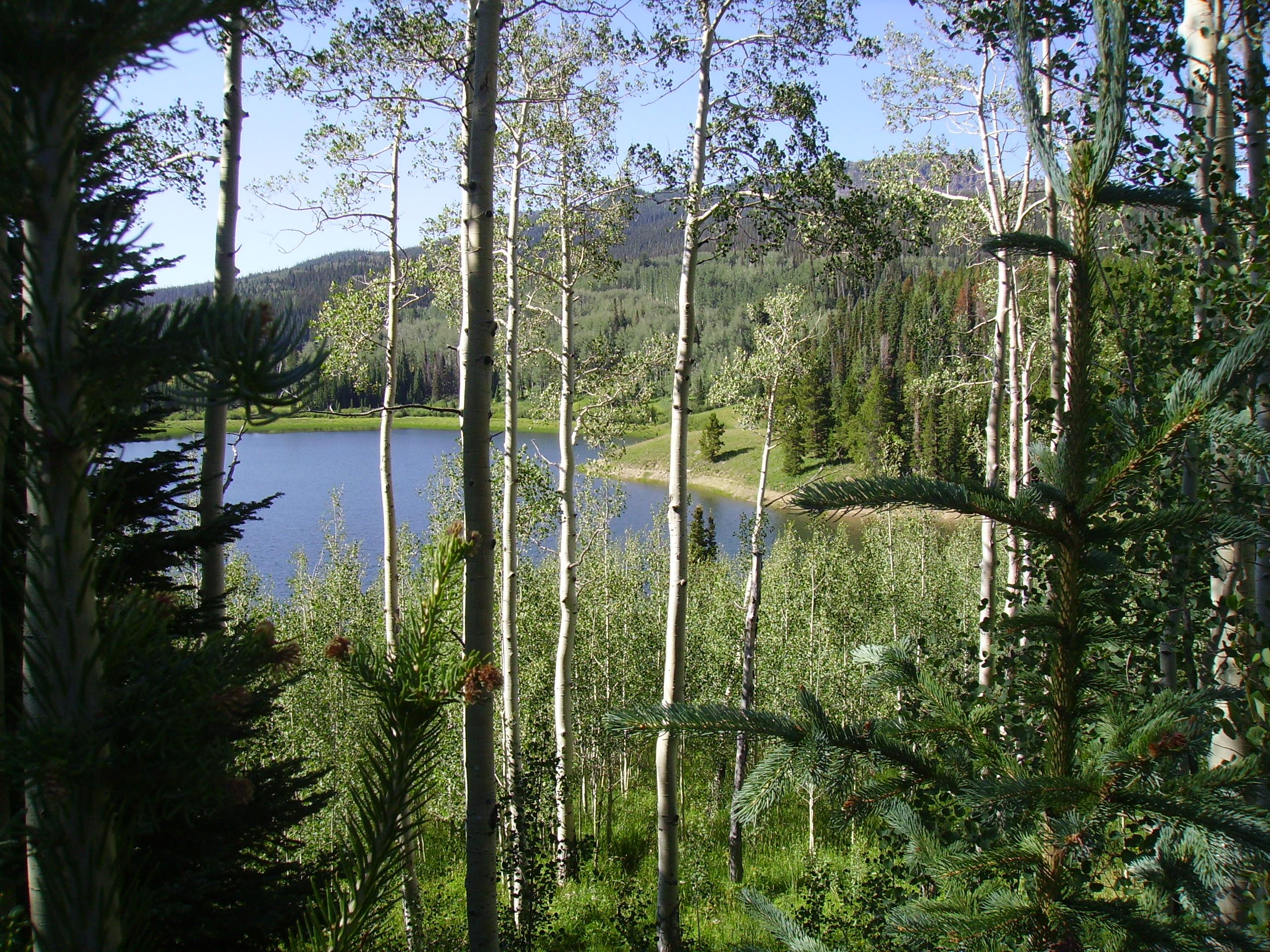Photo of aspens with Chapman Reservoir in background