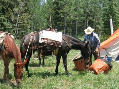 Man pcaking horses with saddle bags
