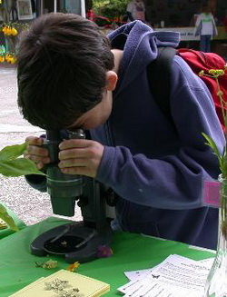 Young student viewing through a microscope