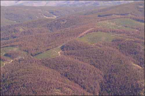 Grandby Aerial View of Bark Beetle Infestation