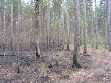 example of a firebreak on private property.
