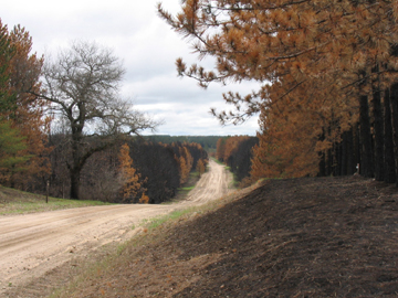 The Hughes Lake fire of 2006 jumped a road.