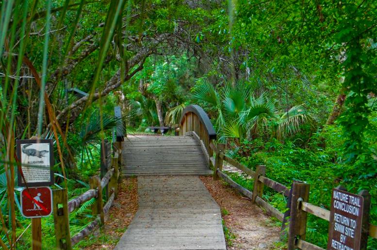 end of the nature trail at fern hammock forest service   fern hammock springs  rh   fs usda gov