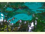 Aqua and gray tones of the springs at Fern Hammock