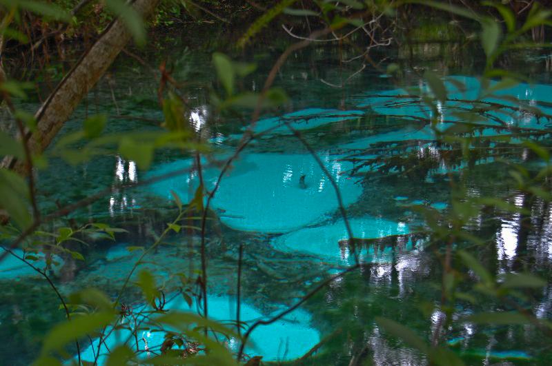the mysterious springs of fern hammock ocala national forest   home  rh   fs usda gov