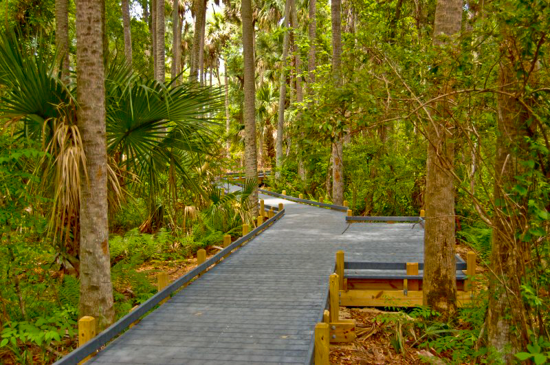 Along the boardwalk of the Juniper Nature Trail