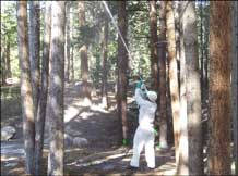 Spraying Trees