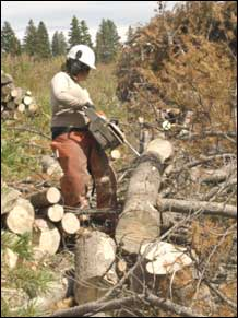 Colorado Youth Corps member cutting hazard treesNear Steamboat Springs