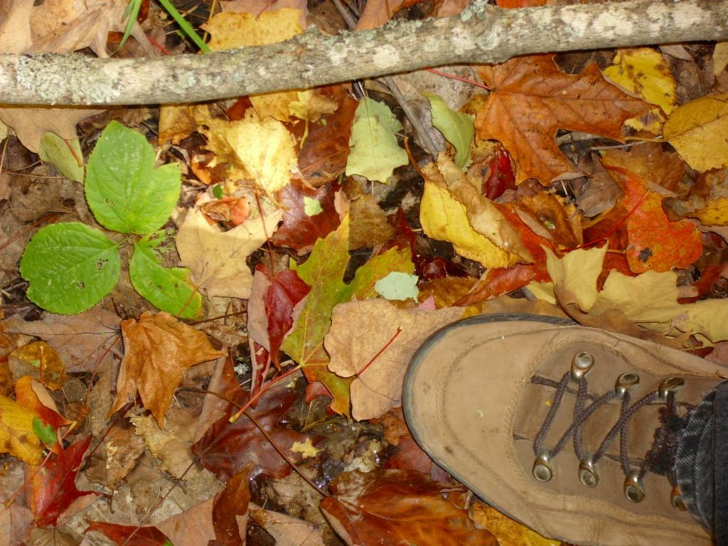 Hiking boot in fall leaves