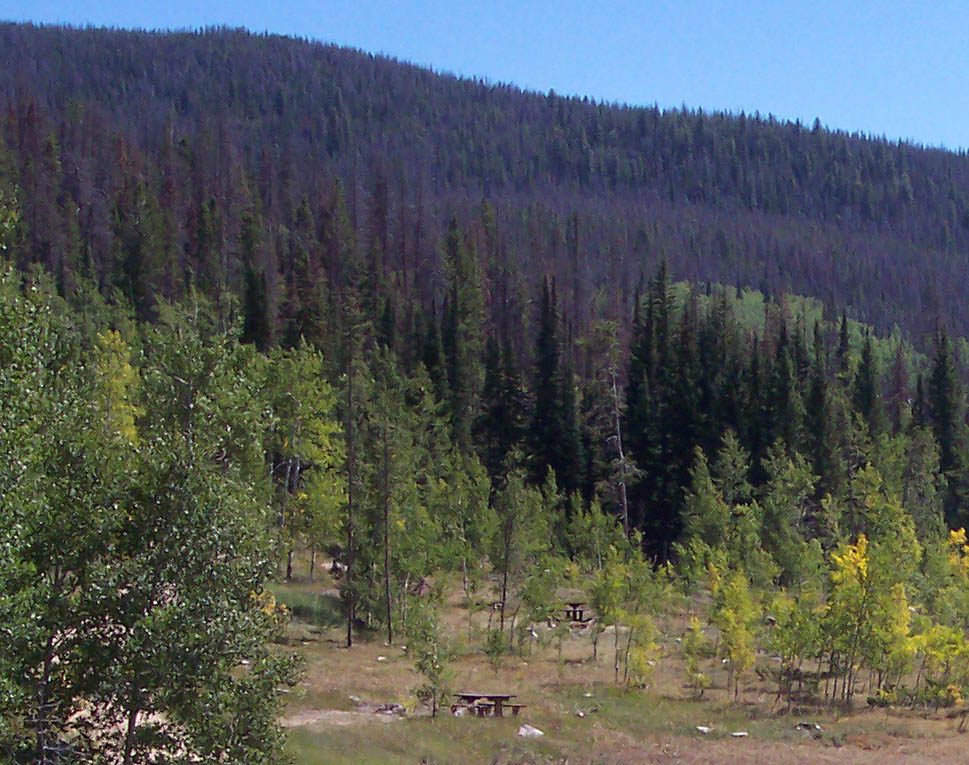 Photo of Blacktail Campground cleared of dead trees