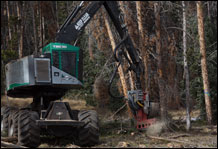 Large machines clear dead trees