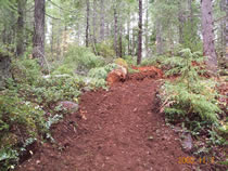 Photo of Huckleberry Flats OHV trail showing dirt trail in forested setting