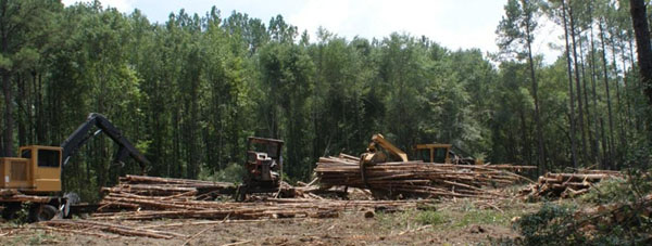 Harvest of a range of wood products from timber to pulpwood to biomass.